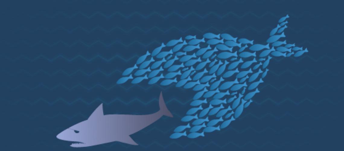 Big-Fish-Vs-Small-Fish