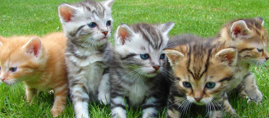 cats-vet-pk
